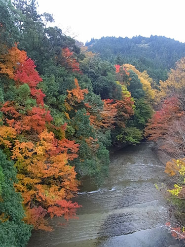 君津市笹川湖畔公園の紅葉状況